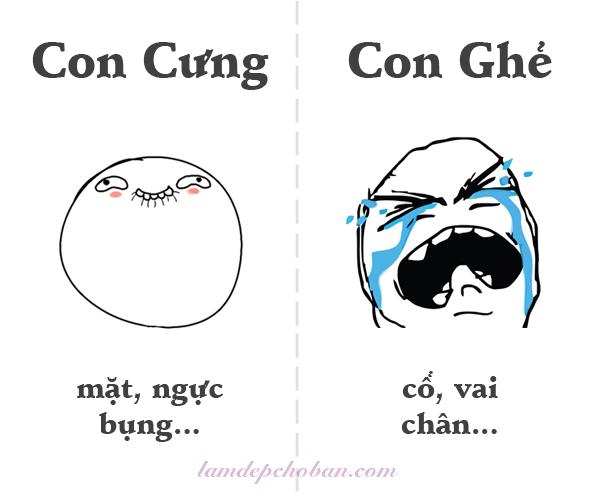 con-cung-con-ghe