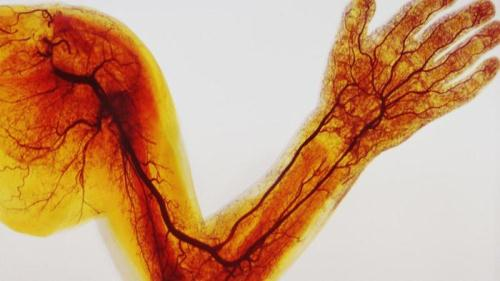 difference-between-veins-arteries-capillaries